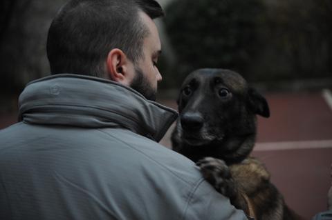 malinois chien sécurité privée paris ile de france