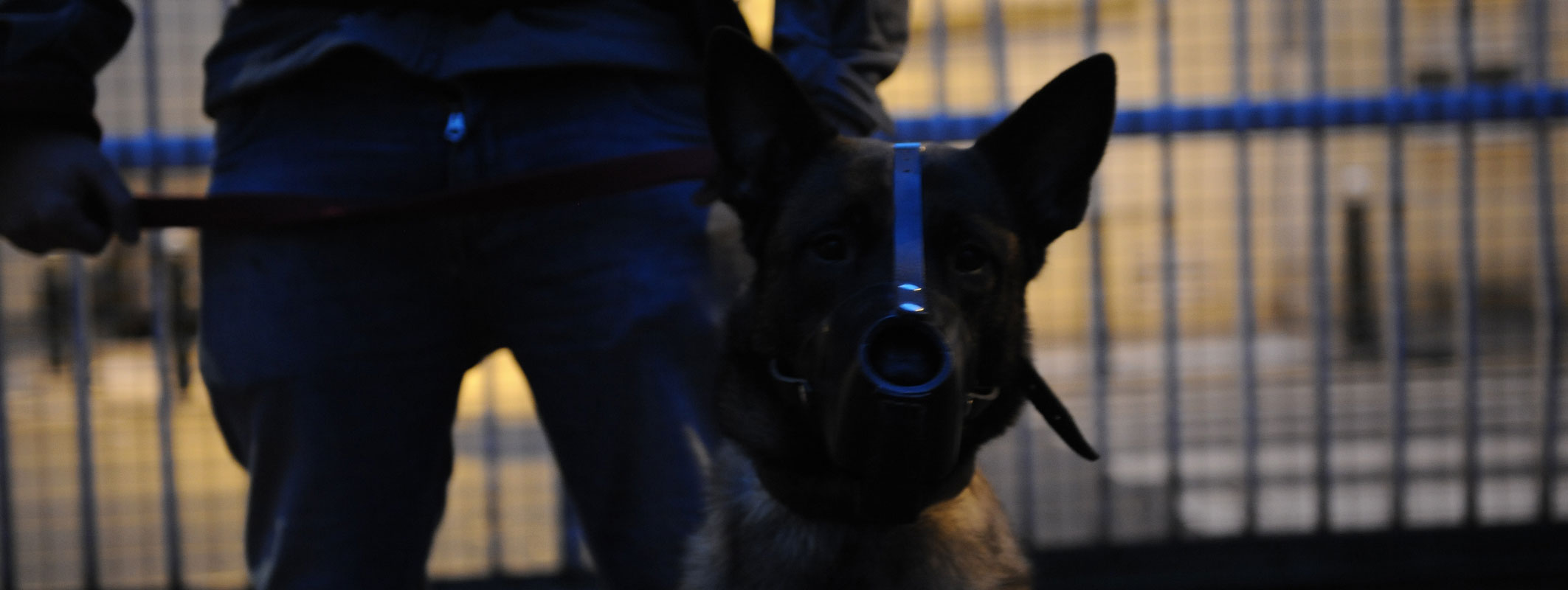 plan du site brigade canine