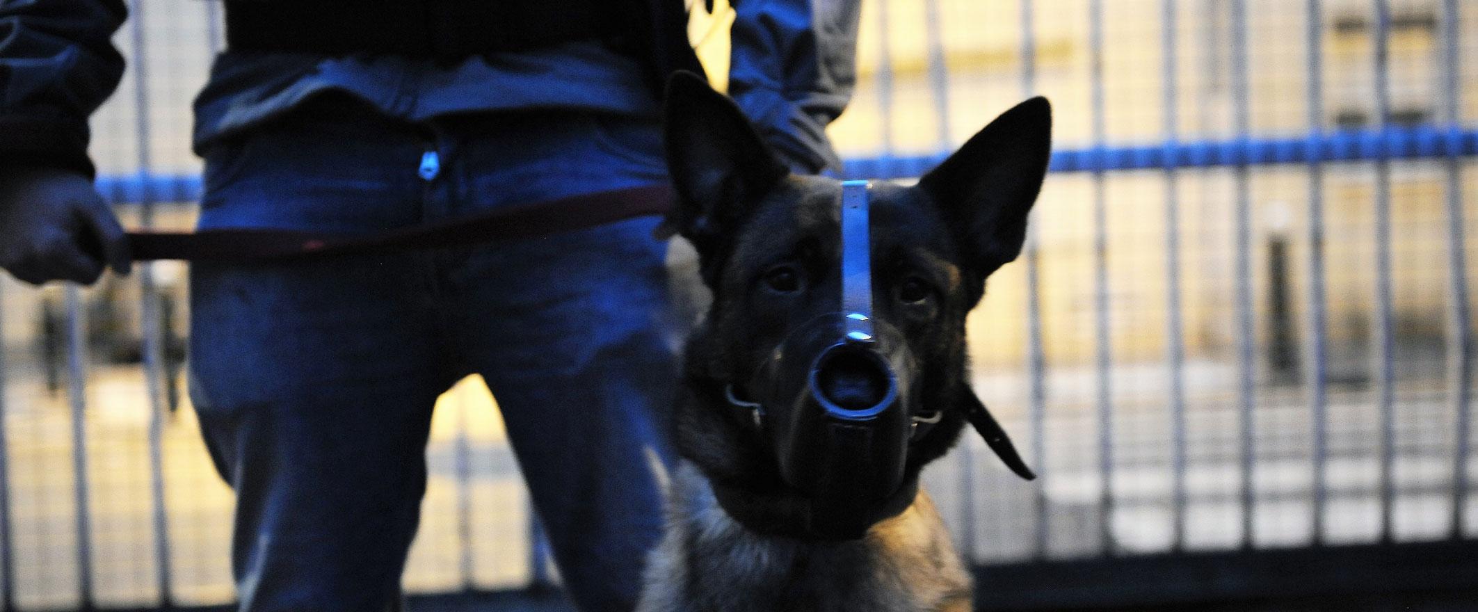 La mission d'interception par un maitre-chien sur Paris Ile de France