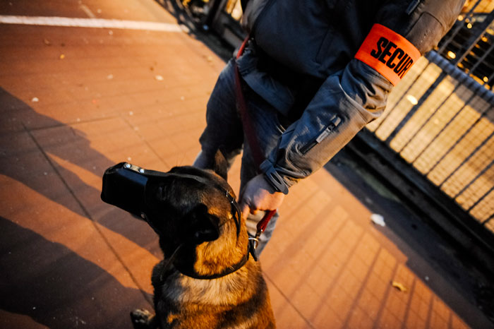 Brigade canine - maitre chien avec son chien